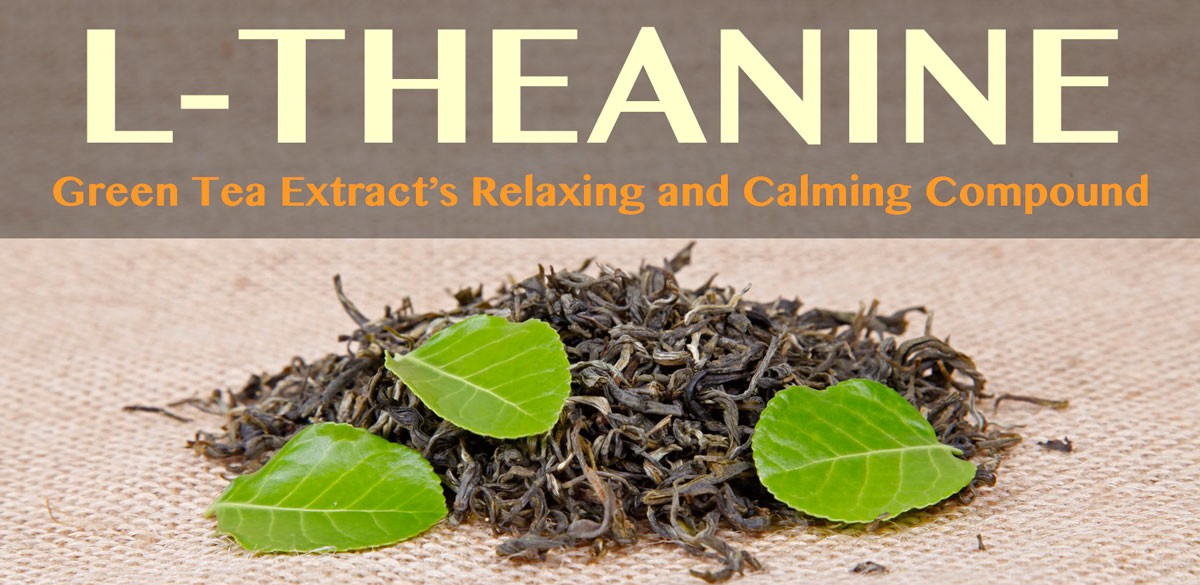 L-Theanine: Green Tea Extract's Relaxing and Calming Compound