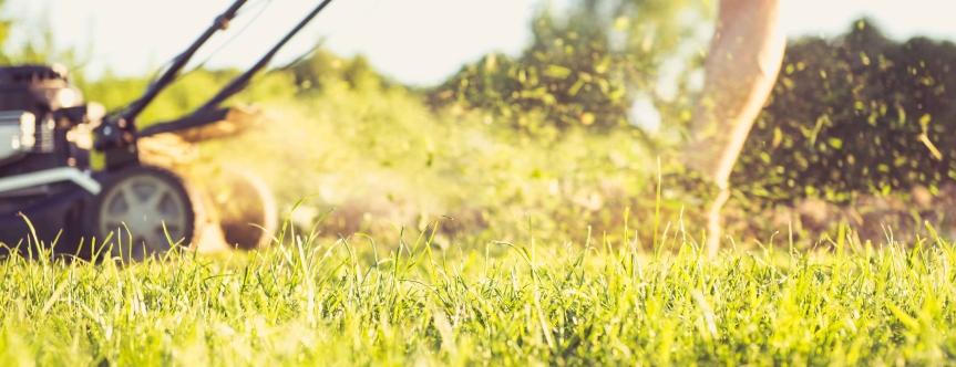 Lawn Disease Prevention