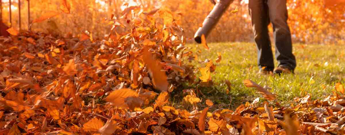 Pile of golden amber and orange leaves, approached by a person carrying a leafblower, blowing the leaves up in the air from short, well-kept grass. Image is cropped below the waist of the lawn care professional.